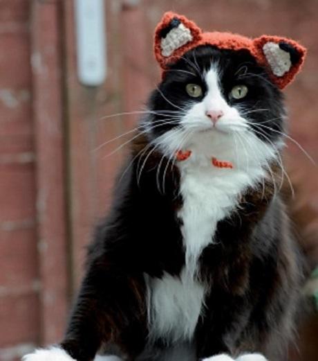 Foxy Feline