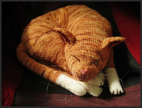Jingga the orange tabby cat