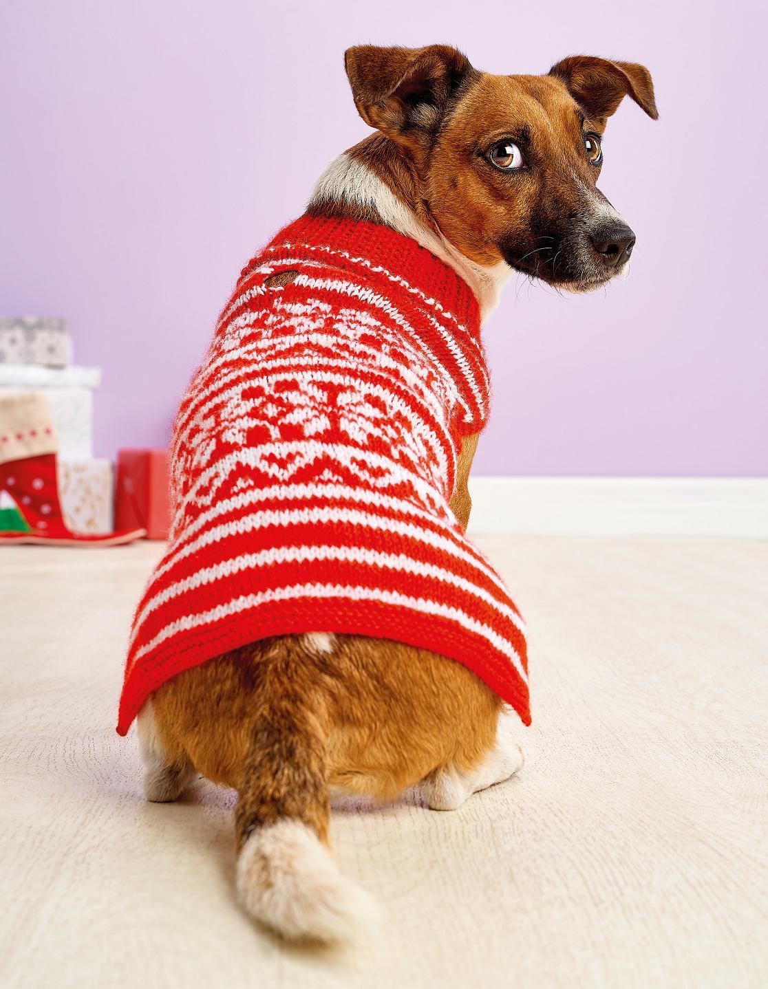 Easy Fair Isle Dog Coat | Free Knitting Patterns | Let's ...
