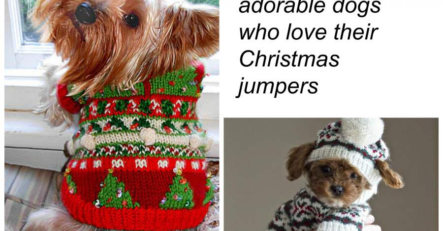 10 adorable dogs who love their Christmas jumpers | Blog