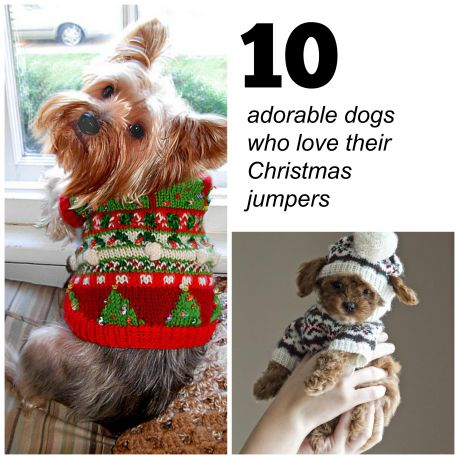 10 adorable dogs who love their Christmas jumpers