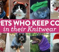 8 Pets Who Keep Cosy In Their Knitwear