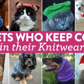 8 Super Adorable Pets Who Keep Cosy In Their Knitwear