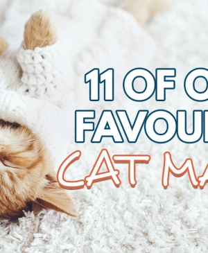 11 Of Our Favourite Cat Makes