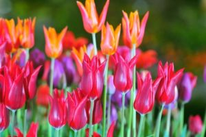 Win tickets to the Harrogate Spring Flower Show